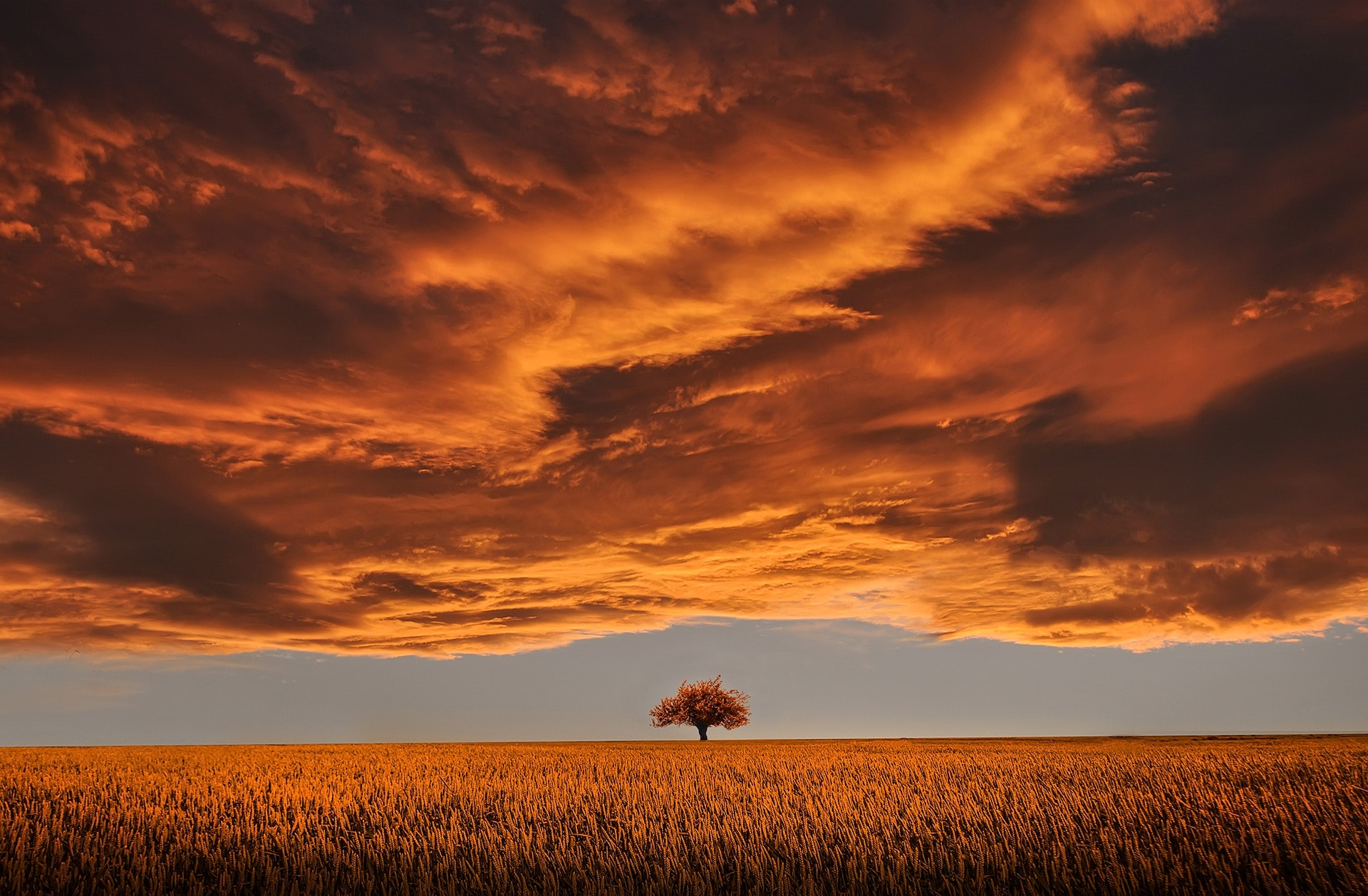 albero isolato in un campo